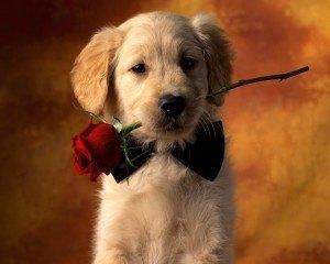 cachorro_enamorado-1280x1024