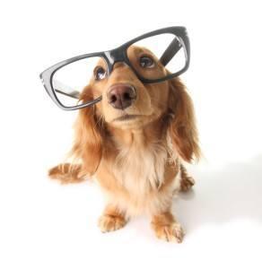 shutterstock_27405649-perro-inteligente