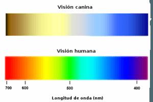 vision-colores-perros-humanos