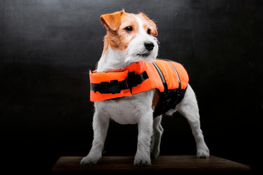 TM Abrigo aprueba de Agua de Perro para Invierno Ropa para Perros peque/ños medianos y Grandes Mascotas Tallas S M L XL XXL 3XL 4XL 5XL Idepet
